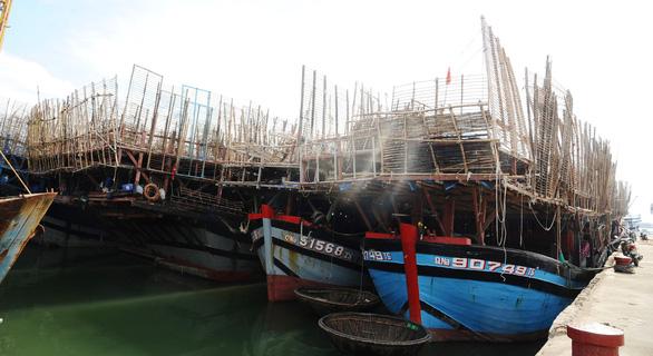 Không xuất được mực khô sang Trung Quốc, tỉnh Quảng Nam cầu cứu các Bộ - Ảnh 3.