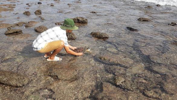 Cứu rùa biển quý hiếm khỏi lưới nhựa ở Côn Đảo - Ảnh 1.