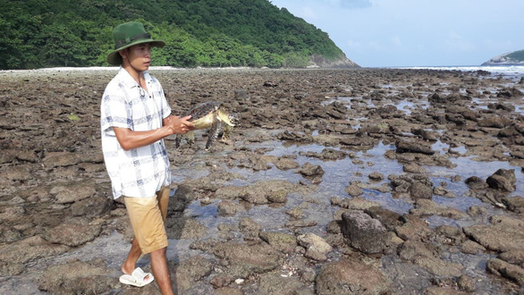 Cứu rùa biển quý hiếm khỏi lưới nhựa ở Côn Đảo - Ảnh 3.