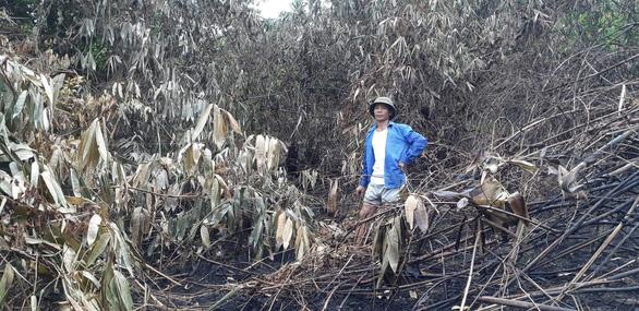 Yêu cầu ngân hàng 10 tỉnh hỗ trợ người vay bị thiệt hại do cháy rừng - Ảnh 1.