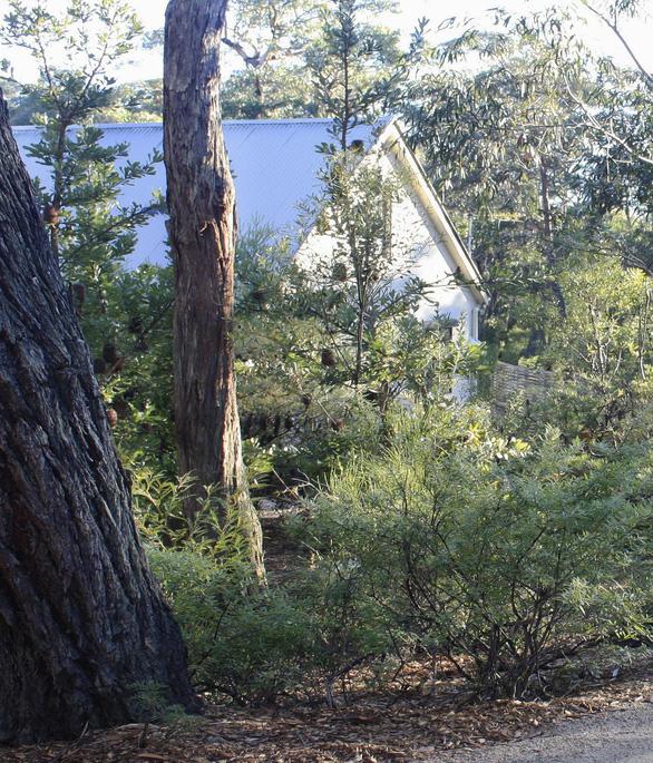 Bỏ phố lên núi, hòa mình vào thiên nhiên trong ngôi nhà tối giản ở Úc - Ảnh 10.