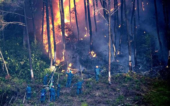 Ngăn cháy rừng từ chính sách lâm nghiệp - Ảnh 3.