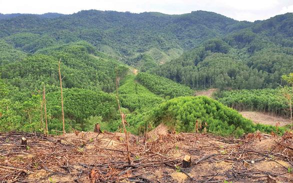 Ngăn cháy rừng từ chính sách lâm nghiệp - Ảnh 1.