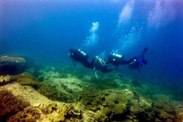 Làm giảm hơn 500ha khu bảo tồn biển Hòn Cau, Bình Thuận kiểm điểm nhiều đơn vị - Ảnh 2.