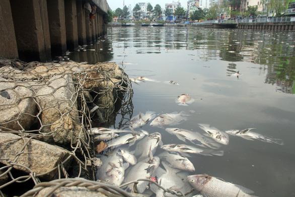 30 tỉ đồng nạo vét kênh Nhiêu Lộc - Thị Nghè ngăn cá chết - Ảnh 1.