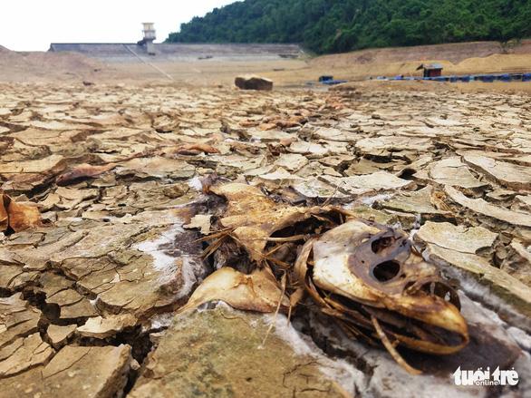 Hồ chứa nước ở Huế cạn khô kỷ lục, hơn 320ha lúa nguy cấp - Ảnh 1.
