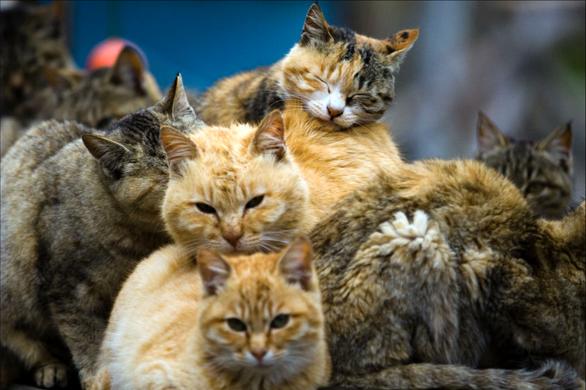 Cho mèo hoang ăn dù bị cấm, cụ bà Mỹ sẽ phải nhận án tù? - Ảnh 1.