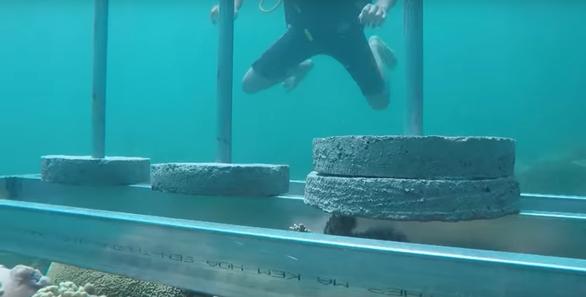 Cuộc đua kỳ thú bị phản ứng vì nghi làm tổn hại rạn san hô Phú Yên - Ảnh 4.