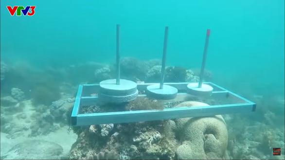 Cuộc đua kỳ thú bị phản ứng vì nghi làm tổn hại rạn san hô Phú Yên - Ảnh 2.