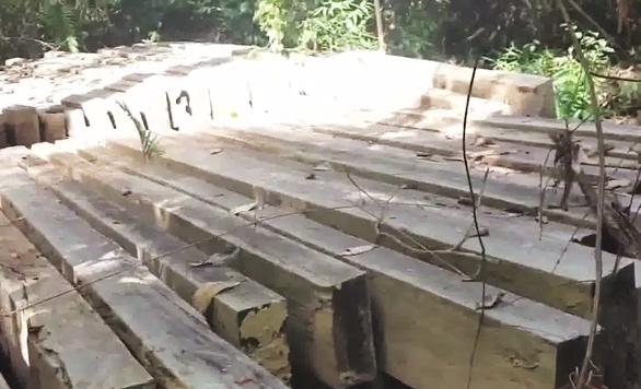 Nghệ An kiểm tra vụ phá rừng trong Vườn quốc gia Pù Mát - Ảnh 1.