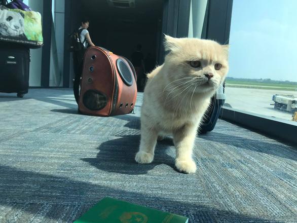 Chú mèo tên... Chó đi máy bay khoang hành khách làm dân mạng choáng váng - Ảnh 3.