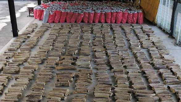 Singapore cấm bán mọi sản phẩm liên quan đến ngà voi - Ảnh 1.