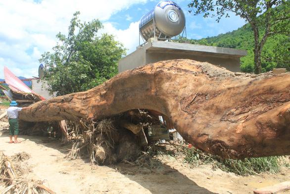 Lũ rút, vô số gỗ khủng ở lại bản Xa Ná - Ảnh 1.