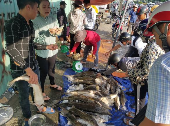 Tranh nhau mua cá tầm giải cứu trại cá Lâm Đồng trên vỉa hè TP.HCM - Ảnh 3.