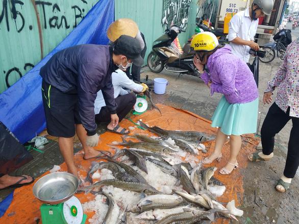 Tranh nhau mua cá tầm giải cứu trại cá Lâm Đồng trên vỉa hè TP.HCM - Ảnh 4.