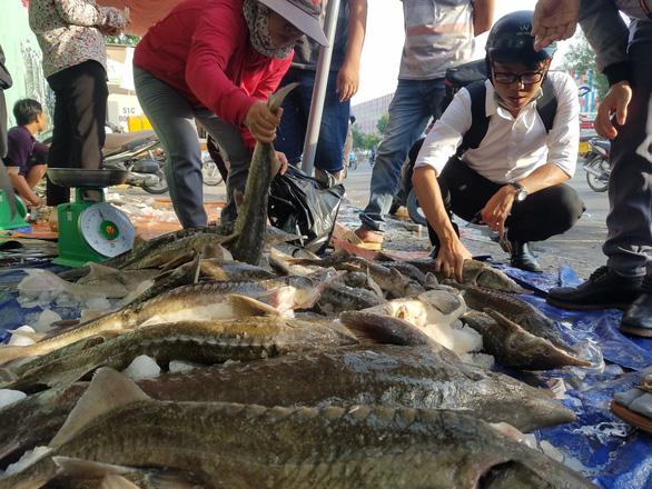 Tranh nhau mua cá tầm giải cứu trại cá Lâm Đồng trên vỉa hè TP.HCM - Ảnh 5.
