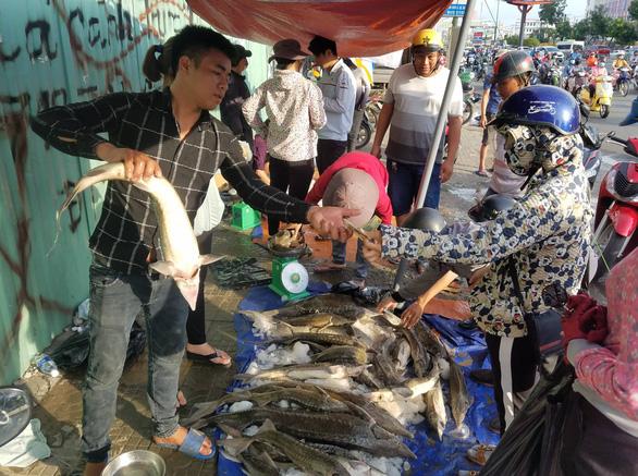Tranh nhau mua cá tầm giải cứu trại cá Lâm Đồng trên vỉa hè TP.HCM - Ảnh 6.