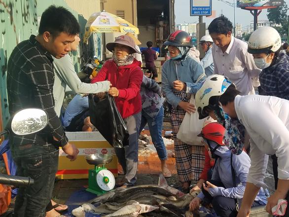 Tranh nhau mua cá tầm giải cứu trại cá Lâm Đồng trên vỉa hè TP.HCM - Ảnh 7.