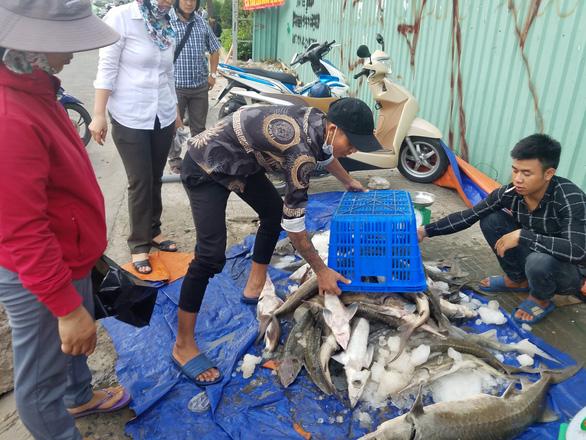 Tranh nhau mua cá tầm giải cứu trại cá Lâm Đồng trên vỉa hè TP.HCM - Ảnh 8.