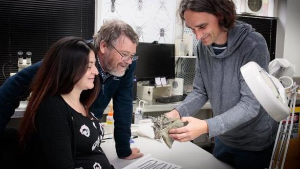 Phát hiện hóa thạch chim cánh cụt cao bằng người - Ảnh 2.