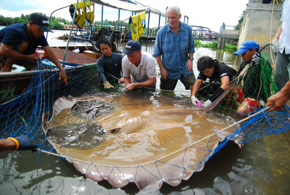 Con người sẽ không còn cơ hội thấy cá khổng lồ trên sông Mekong - Ảnh 4.