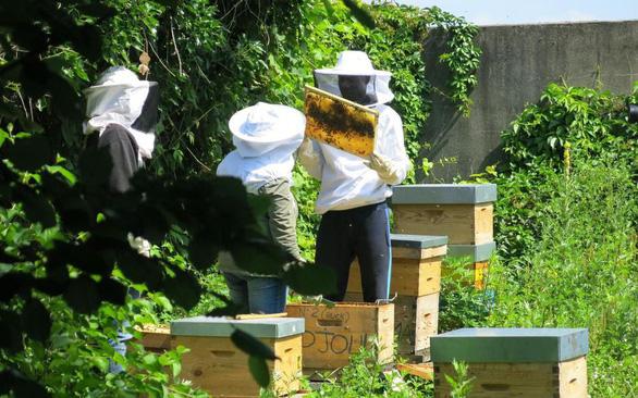 Nghề nuôi ong cho người tị nạn ở Paris - Ảnh 1.