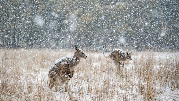 Thiên nhiên dữ dội và êm đềm trong cuộc thi nhiếp ảnh Úc - Ảnh 5.