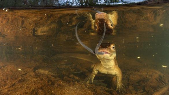 Thiên nhiên dữ dội và êm đềm trong cuộc thi nhiếp ảnh Úc - Ảnh 7.