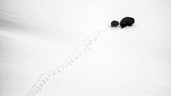 Thiên nhiên dữ dội và êm đềm trong cuộc thi nhiếp ảnh Úc - Ảnh 8.