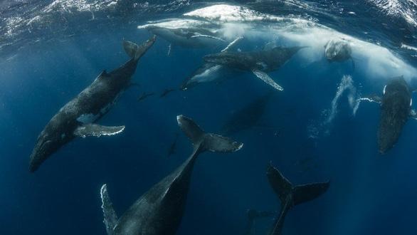Thiên nhiên dữ dội và êm đềm trong cuộc thi nhiếp ảnh Úc - Ảnh 9.
