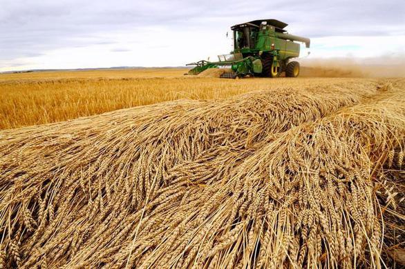 Lờ tịt hàng Mỹ, Trung Quốc âm thầm mua nông sản Canada - Ảnh 1.