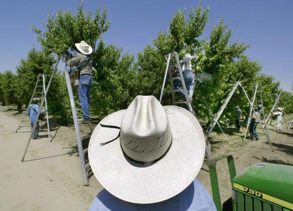 Mỹ: Bang California cấm sử dụng thuốc bảo vệ thực vật chlorpyrifos - Ảnh 1.