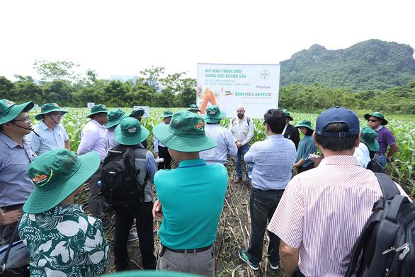 Chuyên gia tới Việt Nam tìm hiểu giải pháp phòng trừ sâu keo - Ảnh 3.