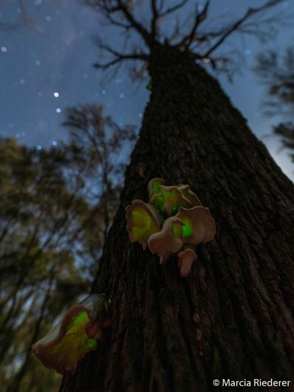 Thiên nhiên dữ dội và êm đềm trong cuộc thi nhiếp ảnh Úc - Ảnh 10.
