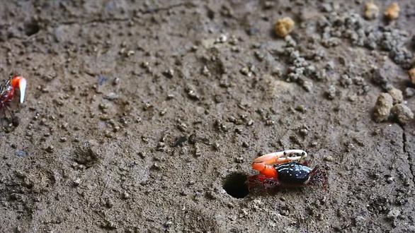 Bất ngờ loài còng nhỏ con thải lượng khí nhà kính khủng - Ảnh 2.