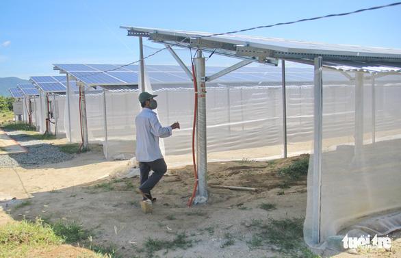 Xin làm nông nghiệp, làm luôn điện mặt trời chui - Ảnh 1.