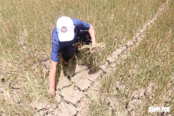 Nghịch lý ở Đắk Lắk: Hơn 1.000ha cây trồng chết khát trong khi nhiều khu vực ngập lụt - Ảnh 3.