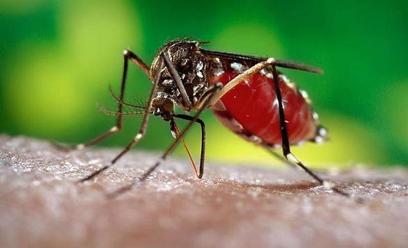 Bệnh mùa mưa nguy hiểm nhất do muỗi vằn gây ra - Ảnh 1.