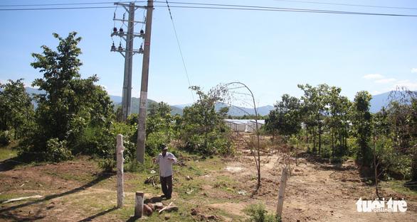 Có dấu hiệu hủy hoại rừng tại dự án làm điện mặt trời chui - Ảnh 1.