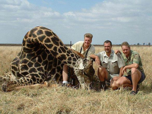 Hươu cao cổ chính thức vào danh sách loài nguy cơ tuyệt chủng - Ảnh 2.