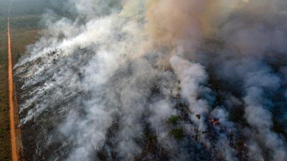 Lãnh đạo G7 cam kết chữa cháy và trồng lại rừng Amazon - Ảnh 2.