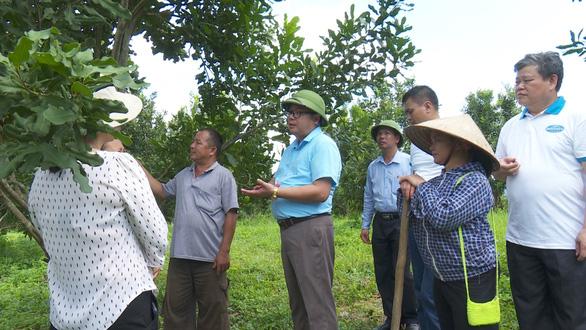 Sắp có thêm 5.000 ha cây tỉ đô từ Macca Nutrition Việt Nam - Ảnh 1.