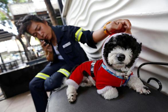 Địu chó đi quét đường, cô công nhân môi trường gây bão mạng - Ảnh 2.