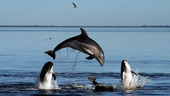 New Zealand cấm du khách bơi cùng cá heo mũi chai - Ảnh 1.