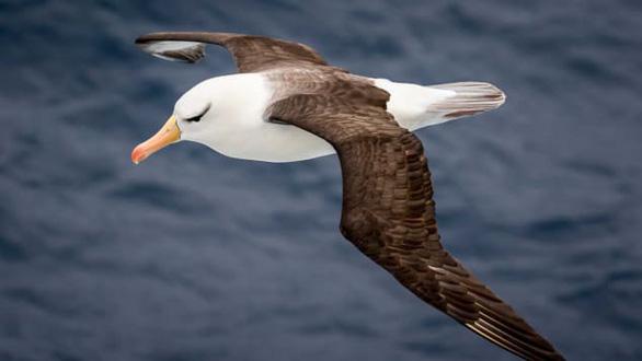 Airbus sắp ra mắt máy bay có sải cánh như chim hải âu - Ảnh 2.