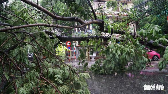 Bão số 3 qua Móng Cái, Hải Phòng, gió giật hàng loạt cây xanh ngã rạp - Ảnh 7.