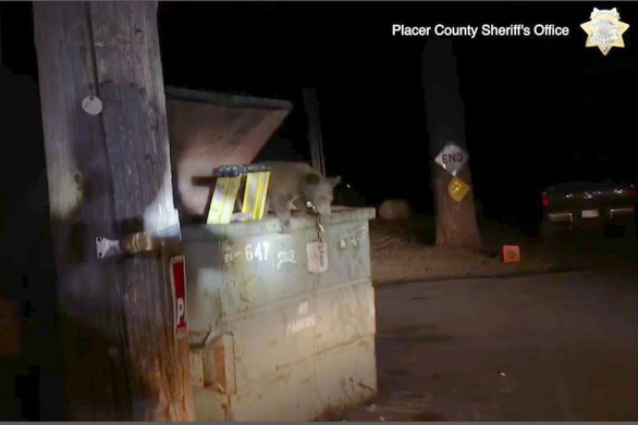 Video cảnh sát, gia đình gấu giải cứu gấu con kẹt trong thùng rác gây bão mạng - Ảnh 1.