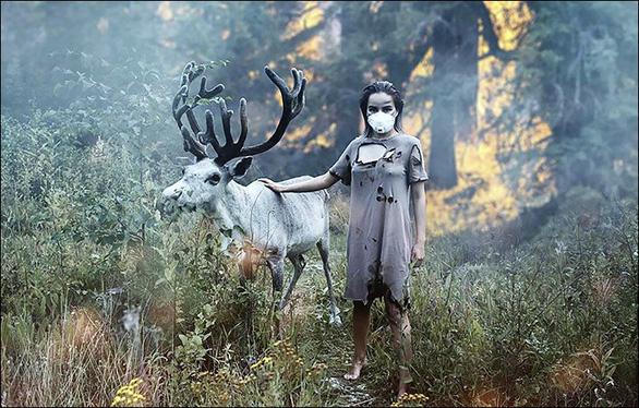 Cháy rừng, cáo đói chấp nhận gặm sôcôla - Ảnh 1.