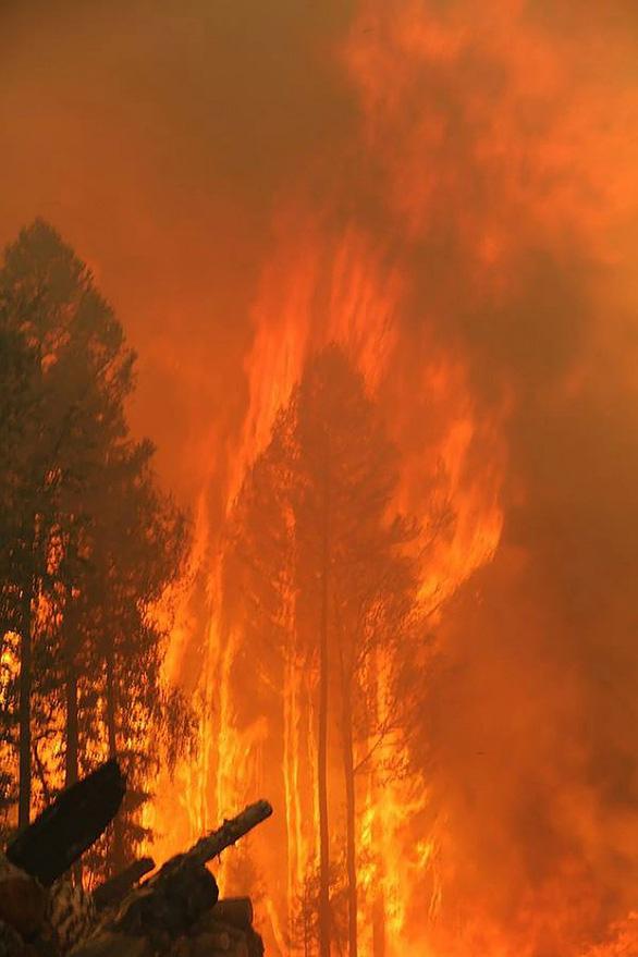 Cháy rừng, cáo đói chấp nhận gặm sôcôla - Ảnh 4.