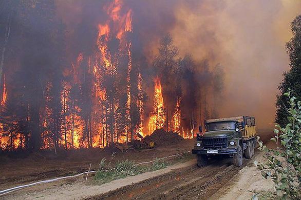 Cháy rừng, cáo đói chấp nhận gặm sôcôla - Ảnh 6.
